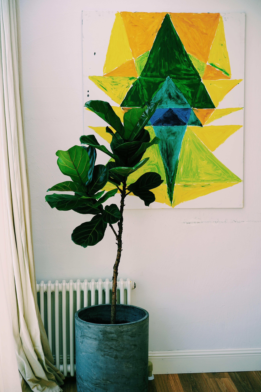 Pflanze vor einer Heizung